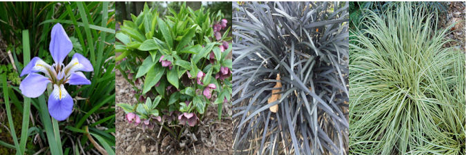 four herbaceous plants for January