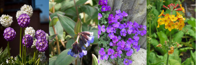four herbaceous plants for March
