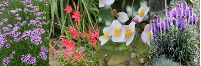 four herbaceous plants for September